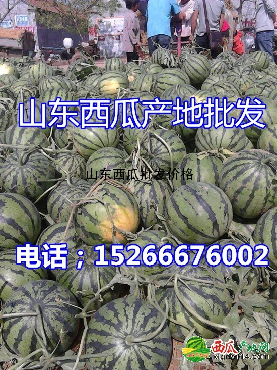 京欣西瓜图二