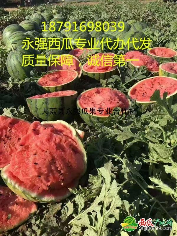 京欣西瓜图三
