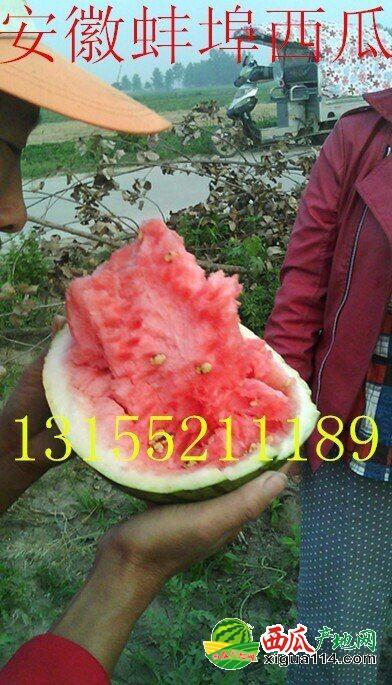 8424西瓜西瓜图一