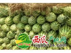 7月1忻州西瓜大量上市忻州西瓜价格