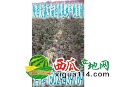 陕西大荔薄皮京欣西瓜甜王西瓜产地今日批发价格