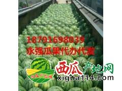 大荔县优质薄皮京欣甜王西瓜产地价格