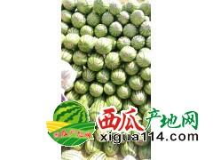 陕宁蒙--蔬菜西瓜信息代办