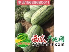 2018年新疆昌吉西瓜代办西瓜种植产地价格