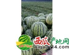 河南开封永兴老刘老吴西瓜代办13613785218