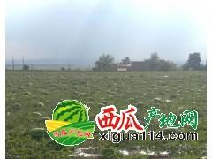 甘肃省会宁县扎子塬西瓜代办电话60吨出售