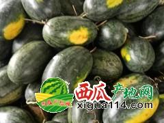 2019年越南边贸黑美人西瓜代办代收-;老雷(广西崇左地区)