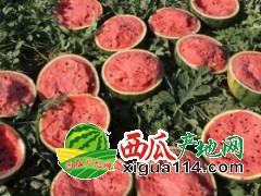 河南开封京欣系列批发市场在哪儿、多钱一斤