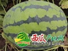 老挝西瓜批发价格代办代发13963719073