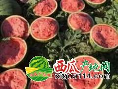 黑龙江绥化西瓜代办代发批发价格13963719073