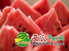 我国最好吃的西瓜到底是哪里?安徽砀山西瓜代办