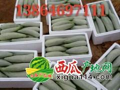 山东潍坊羊角蜜甜瓜产地行情好价格便宜