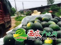 2019年广东阳西西瓜代办批发产地预计在五一上市