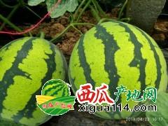 山东聊城甜王西瓜代办产地系列西瓜