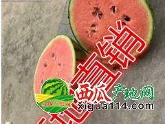 山东潍坊地区早春红玉西瓜价格产地西瓜供应