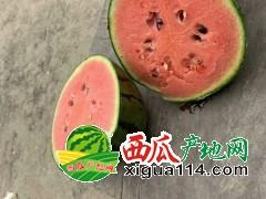山东省潍坊西瓜产地批发价格早春红玉西瓜
