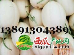 大棚甜瓜-陕西大棚东方蜜甜瓜产地上市价格