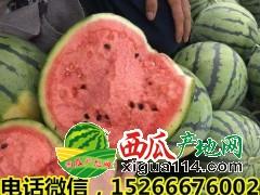 山东省西瓜产地供应价格15266676002