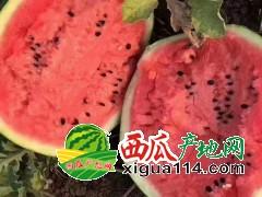 辽宁新民甜王西瓜代收17162404222