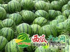 滨州惠民果蔬代购代销