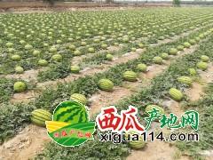 2019年宁夏西瓜多少钱一斤【中卫兴仁西瓜代办】