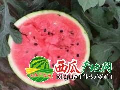 2019年/辽宁新民西瓜价格产地【辽宁新民西瓜代办】