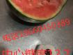 2019年山东潍坊西瓜代购 18660450389