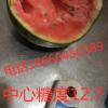 早春红玉系列西瓜 3斤起步 头茬2.5元  二茬2元
