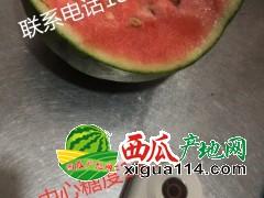 山东潍坊早春红玉大果1.1元 小果头插2.2 二茬1.6