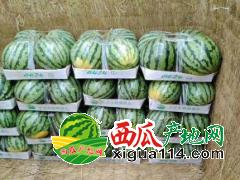 河南美都西瓜8424等西瓜大量上市各种品种瓜