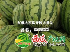 山西忻府区曹张乡解村红瓤大西瓜开园大批发