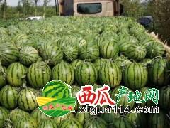 吉林省洮南市黑水镇西瓜现货供应