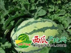 2019年内蒙古通辽西瓜代办-