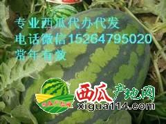 菏泽东明西瓜代办菏泽东明西瓜价格15264795020