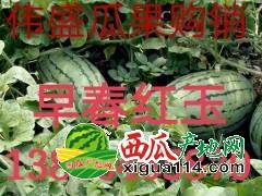 山东潍坊红玉西瓜 3斤以上价格便宜