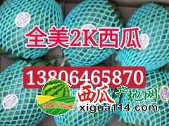 早春红玉西瓜 全美2k西瓜大量供应