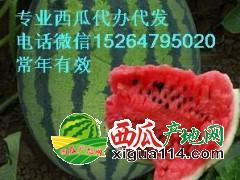 潍坊青州西瓜今日价格潍坊青州专业代办15264795020