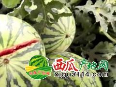 黑龙江绥化市西瓜供应代办代收价格行情