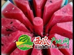 开封通许西瓜上市时间~最大的西瓜批发市场在哪儿