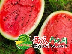 辽宁新民西瓜代办代收13948547929