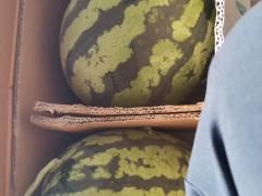缅甸西瓜代办和云南西瓜代办-云南西瓜多少钱一斤
