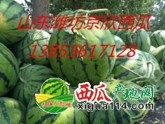 山东潍坊大量供应京欣西瓜/山东西瓜产地联系地址