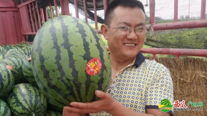 甜王西瓜西瓜图一
