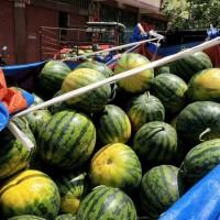 2021年广西西瓜代办代收甜王西瓜价格批发/广西黑美人西瓜产地