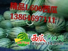 山东潍坊L600西瓜产地