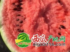 2020年安徽西瓜代办批发8424西瓜,甜王,京欣西瓜供应