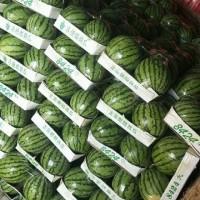 今日夏邑西瓜收购1.6一斤15037898152