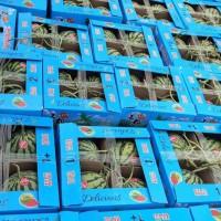 夏邑8424冰糖麒麟、美都大量供应