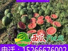 甜王西瓜价格行情15266676002山东省西瓜批发