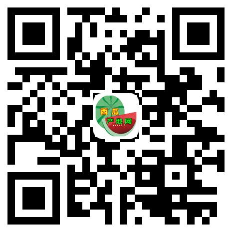 西瓜产地网15x15
